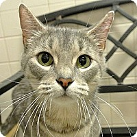 Adopt A Pet :: Maxine - white settlment, TX