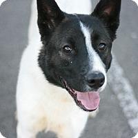 Adopt A Pet :: Beau - Canoga Park, CA