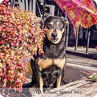 Adopt A Pet :: Mandy - Bristol, TN