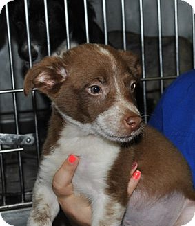 Terrier (Unknown Type, Medium) Mix Puppy for adoption in East Hartford, Connecticut - Cubby meet me 7/24