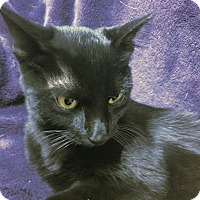 Adopt A Pet :: Africa - Dallas, TX