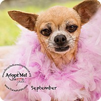 Adopt A Pet :: MISS SEPTEMBER - Inland Empire, CA