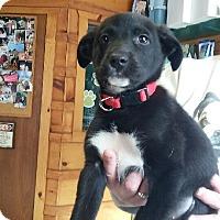 Adopt A Pet :: Bella - Treton, ON