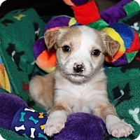 Adopt A Pet :: Kaelyn - Alpharetta, GA