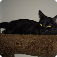 Adopt A Pet :: Spooky - College Station, TX