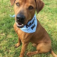 Adopt A Pet :: Dan - Corning, CA