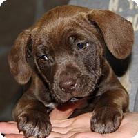 Adopt A Pet :: Lynne - Parker Ford, PA