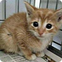 Adopt A Pet :: Penelope - Jefferson, NC