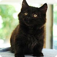 Adopt A Pet :: Teddy - San Carlos, CA