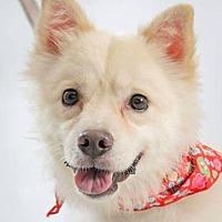 Adopt A Pet :: Romeo - San Ramon, CA