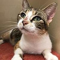 Adopt A Pet :: Alayvia - Lincolnton, NC