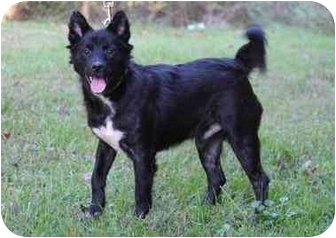 Border Collie Mix Dog for adoption in Jeffersonville, Indiana - Pogo