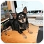 Photo 1 - Chihuahua Dog for adoption in Lakewood, Colorado - Tink
