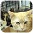 Photo 2 - Domestic Shorthair Cat for adoption in Overland Park, Kansas - Trevor