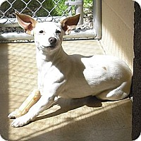 Adopt A Pet :: ROSCO - Wickenburg, AZ