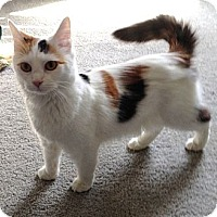 Adopt A Pet :: Mango - Monroe, GA