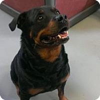 Adopt A Pet :: Alex - Berlin, CT