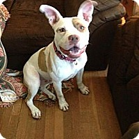 Adopt A Pet :: Lady Bug - Pittsbugh, PA