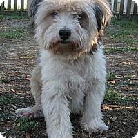 Adopt A Pet :: Deegan - Jacksonville, FL