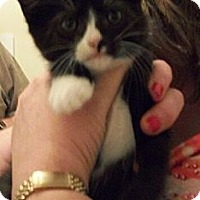 Adopt A Pet :: Caboose - Reston, VA