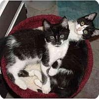 Adopt A Pet :: Ella - Davis, CA