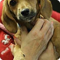 Adopt A Pet :: Fruitcake - Phoenix, AZ