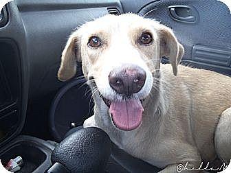 Terrier (Unknown Type, Medium) Mix Dog for adoption in Whitestone, New York - Emma