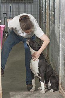 Labrador Retriever Mix Dog for adoption in Poland, Indiana - Kat