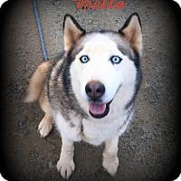 Adopt A Pet :: Bella - Denver, NC