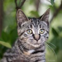 Adopt A Pet :: Aria - Calgary, AB