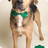 Adopt A Pet :: Logan - Wyandotte, MI