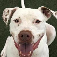 Adopt A Pet :: Maximus - Orlando, FL