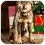 Photo 2 - Australian Shepherd Mix Dog for adoption in Portland, Oregon - Samantha