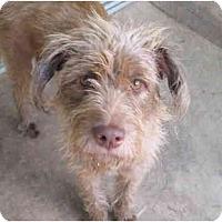 Adopt A Pet :: blue bell - houston, TX