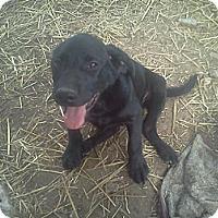 Adopt A Pet :: Eugene - Milford, CT