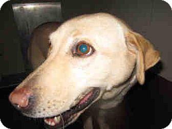 Labrador Retriever Mix Dog for adoption in Newnan City, Georgia - Lady
