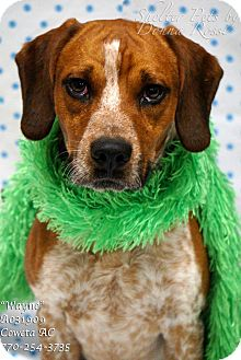 Beagle Mix Dog for adoption in Newnan City, Georgia - Wayne