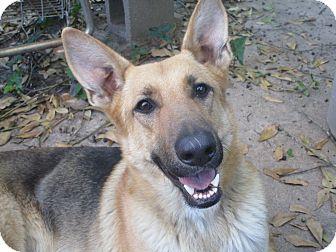 German Shepherd Dog Mix Dog for adoption in Vancouver, British Columbia - LANIE