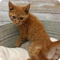 Adopt A Pet :: COLBY - Cleveland, MS