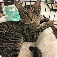 Adopt A Pet :: Einstein - Winchester, CA