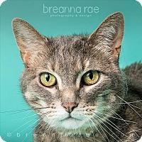 Adopt A Pet :: Big - Sheboygan, WI