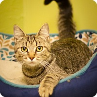 Adopt A Pet :: Molly - Circleville, OH