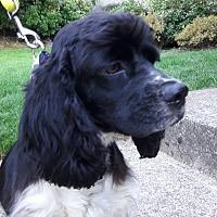 Adopt A Pet :: Izzie - Salem, OR