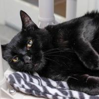 Adopt A Pet :: Kemper - Boise, ID