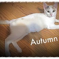Adopt A Pet :: Autumn MKK - Albany, NY