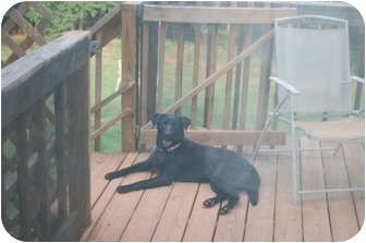 Labrador Retriever Mix Dog for adoption in Seneca, South Carolina - Jilly