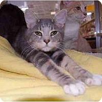 Adopt A Pet :: Daley - Modesto, CA