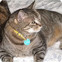 Adopt A Pet :: Leon - Cleveland, OH