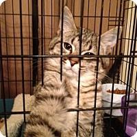 Adopt A Pet :: Timmy - Wenatchee, WA
