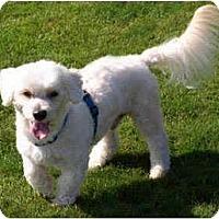 Adopt A Pet :: Kenny - La Costa, CA